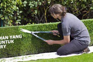 Tanaman yang baik untuk topiary atau tanaman seni pangkas